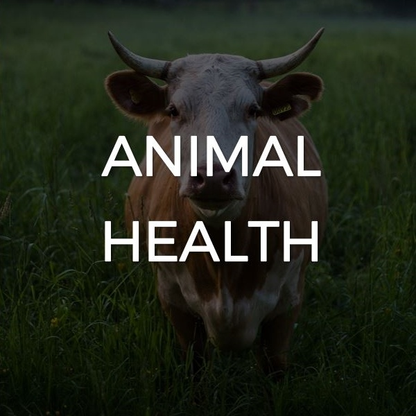 Animal health use case